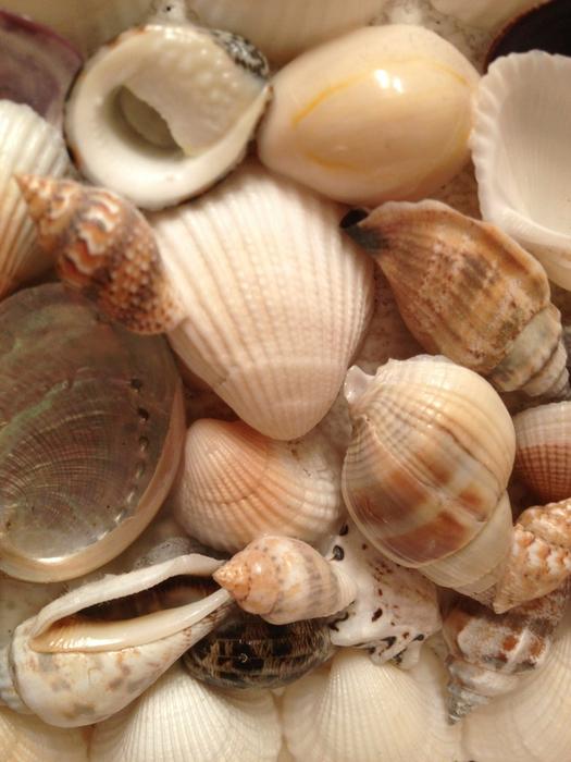 shells_20 (525x700, 386Kb)