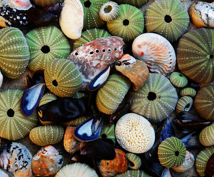 shells_21 (700x577, 584Kb)