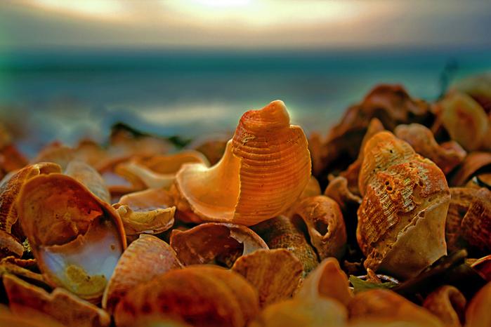 shells_5 (700x466, 241Kb)