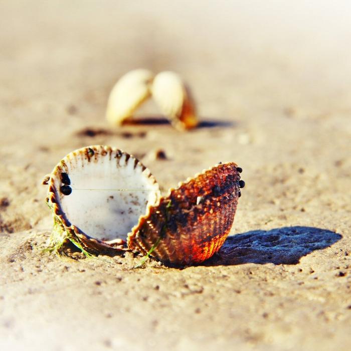 shells_8 (700x700, 413Kb)