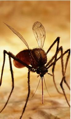 Pomoshh-posle-ukusov-komarov (230x384, 29Kb)