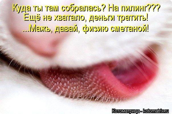 kotomatritsa_5D (604x401, 54Kb)