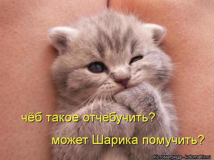 kotomatritsa_CA (700x524, 57Kb)
