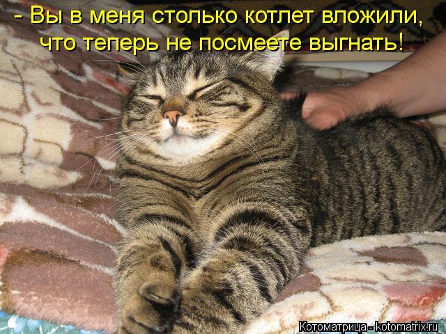 kotomatritsa_hg (640x480, 81Kb)