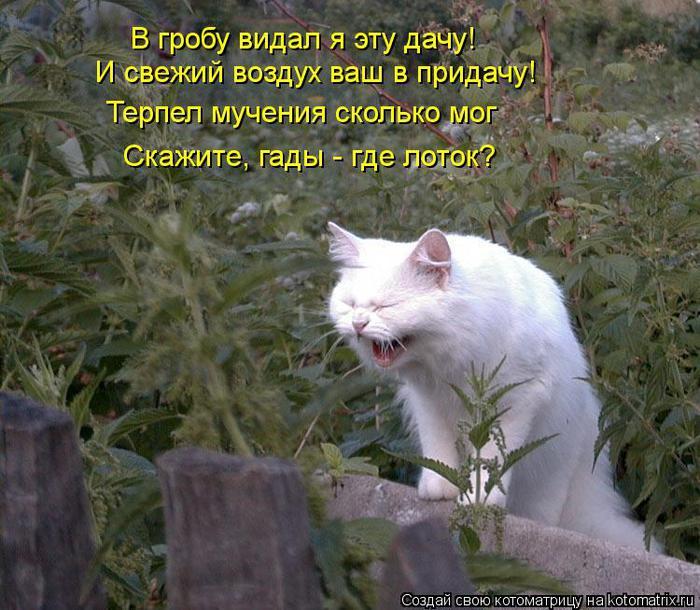 kotomatritsa_Jm (700x610, 81Kb)