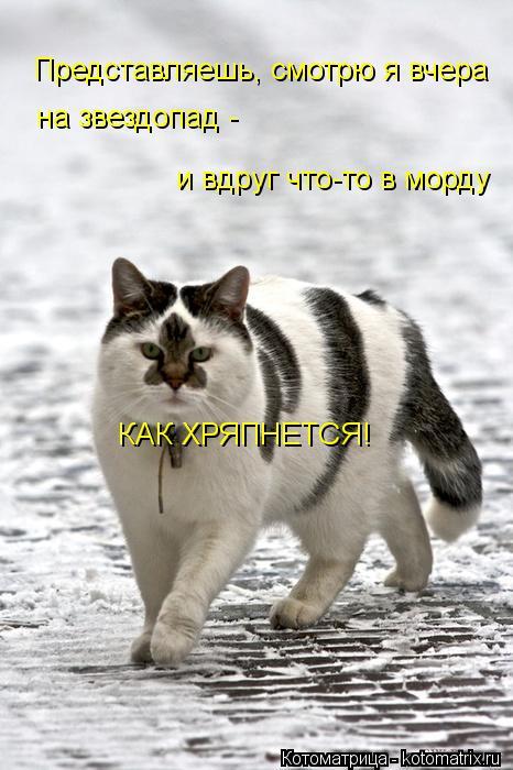 kotomatritsa_Tj (466x700, 58Kb)