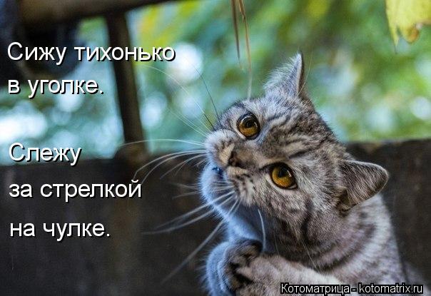 kotomatritsa_xK (604x415, 47Kb)
