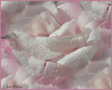 Роза-в-росе (450x361, 261Kb)