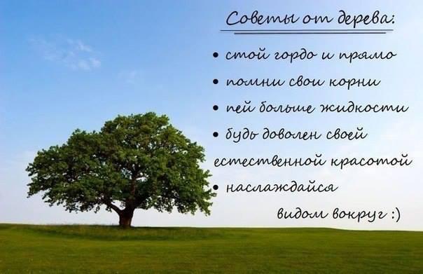 Советы от дерева