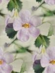 Превью розовый цветок (360x480, 37Kb)