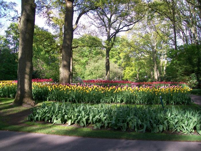 Çiçekler karışık çiçek resimleri bahar çiçekleri bahçe
