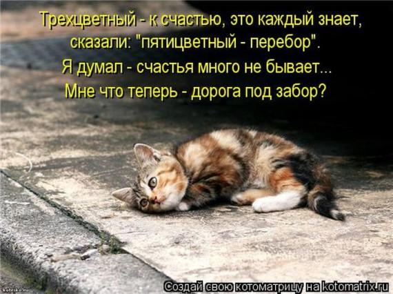 1370038310_1369975475_kotomau0 (570x426, 84Kb)