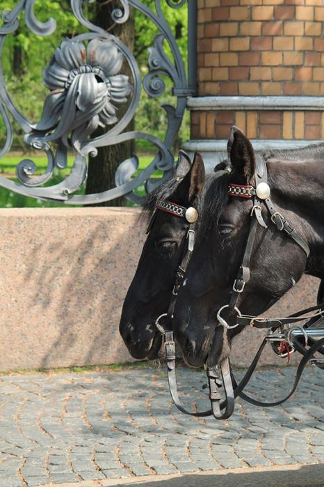 928775_Horses00 (466x700, 290Kb)