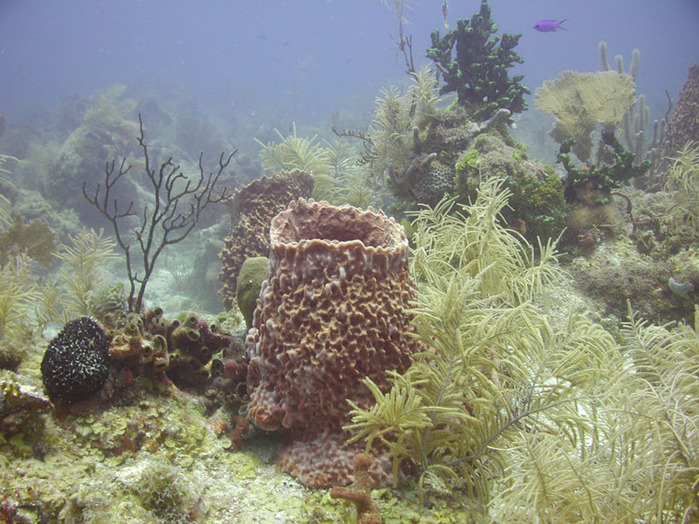 Underwater_Landscape (700x524, 173Kb)