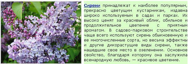 Безымянный9 (616x207, 58Kb)