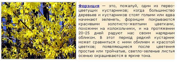 Безымянный11 (618x219, 67Kb)