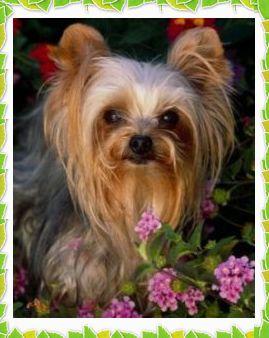 Как избавится от запаха кошек или собак в доме/2719143_61 (269x338, 22Kb)
