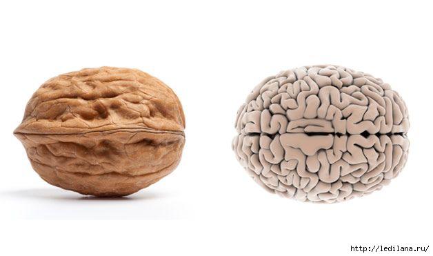 грецкий орех и мозг (628x371, 64Kb)