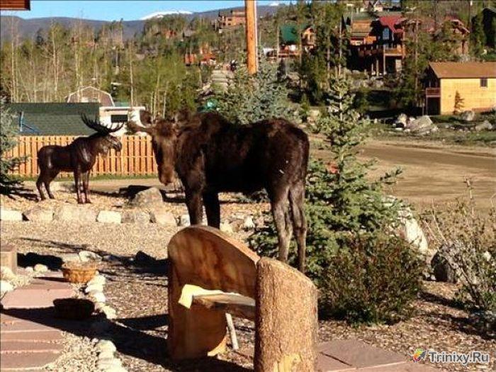 moose_statue_04 (700x525, 96Kb)
