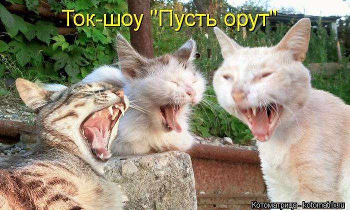 kotomatritsa_N (700x420, 63Kb)