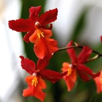 Смотреть Фильм Черная Орхидея