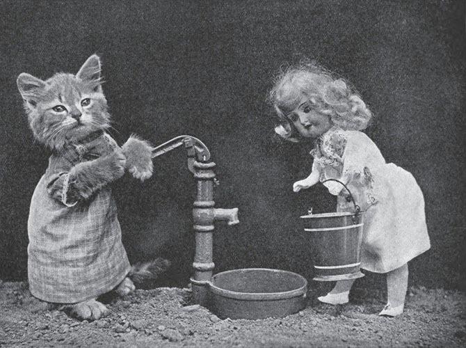 Гарри Фрис. Старинные фотографии котиков и щенков