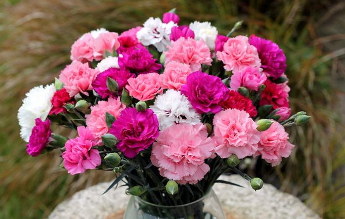 Картинки цветы гвоздики 5