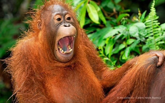 Животные, кажется, вдоволь насмеялись! (Animals seeming to have a good laugh)