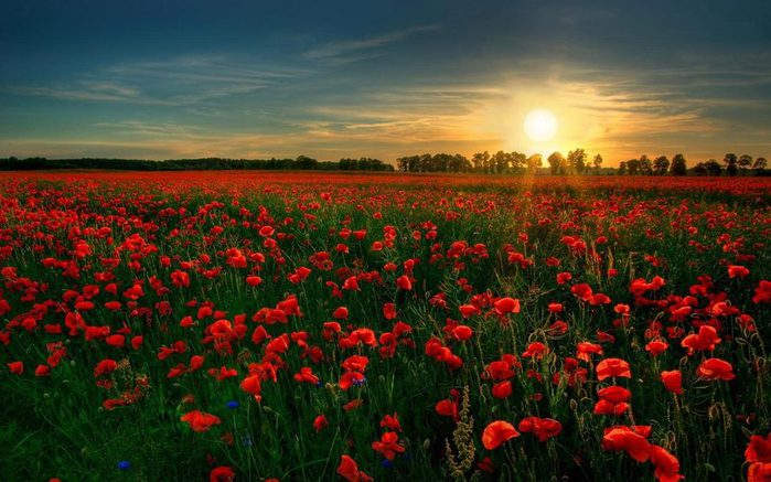 sunset_over_the_field_hd_widescreen_wallpapers_1680x1050 (700x437, 68Kb)