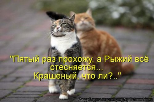 4208855_2_1_ (500x332, 32Kb)