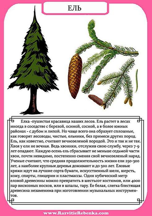 Какие деревья и почему лучше сажать 87