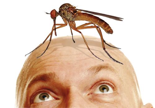 Кого-кусает-комар (500x348, 101Kb)