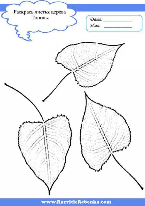 Деревья минск