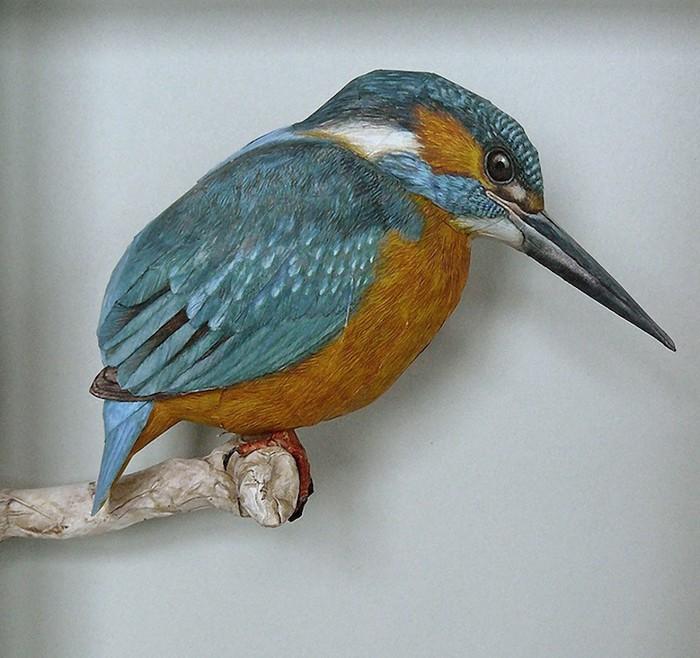 Bird-3 (700x658, 107Kb)