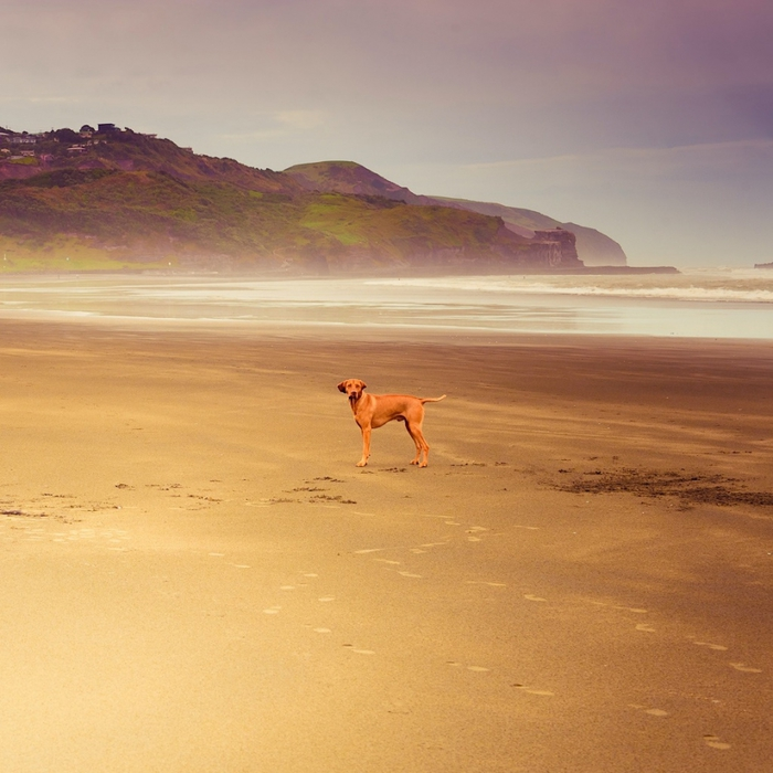 пляж Муриваи фото/4552399_plyaj_Muriwai_novaya_zelandiya_foto_5 (700x700, 286Kb)