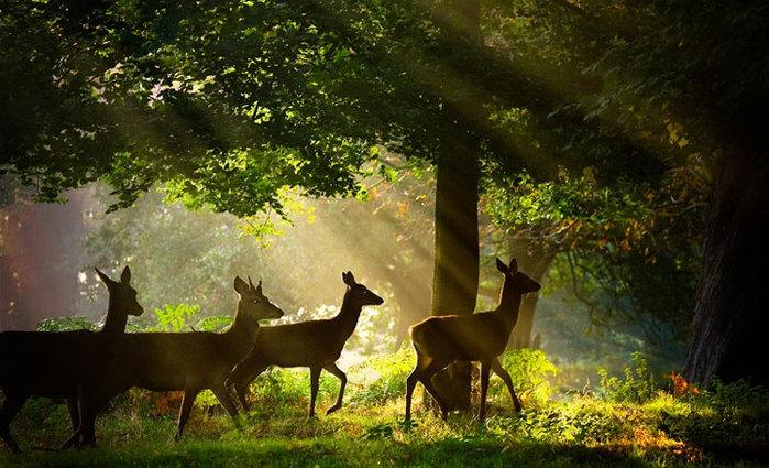 Картинки живой природе