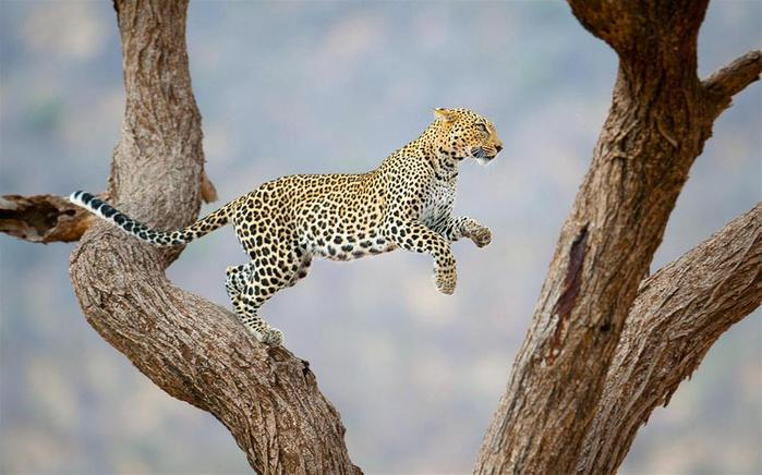 National-Geographic-Traveler-Photo-Contest-2012-8 (700x436, 52Kb)