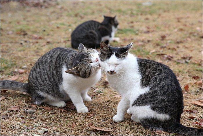 1324788490_cats_01 (700x467, 86Kb)