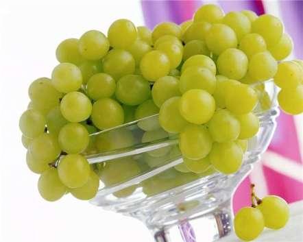 виногр (442x353, 15Kb)