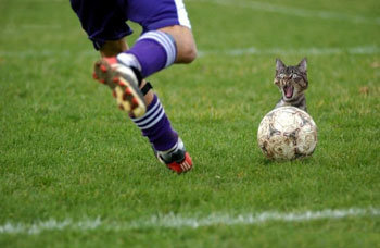 futbol_full (350x228, 35Kb)