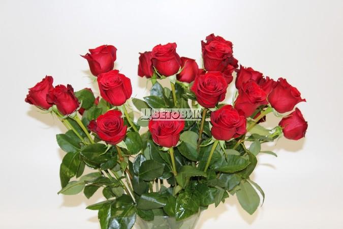 цветы. (675x450, 68Kb)
