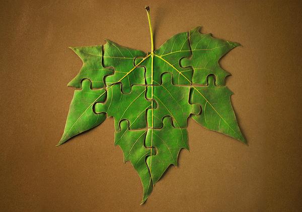 1370987703_leaf (600x422, 194Kb)