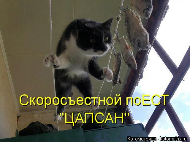 kotomatritsa_q (640x480, 112Kb)