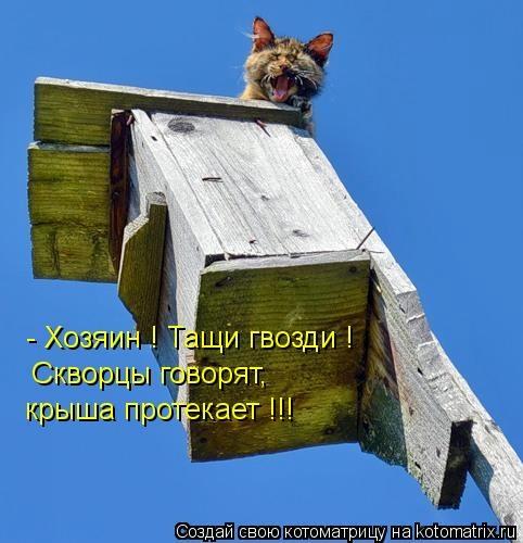 kotomatritsa_AX (482x500, 108Kb)