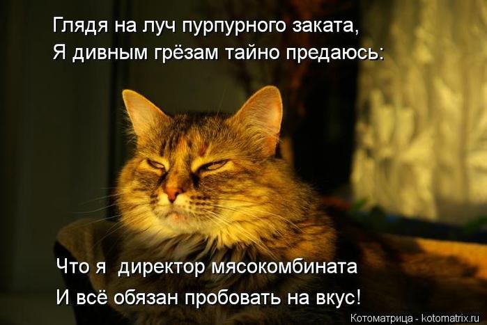 kotomatritsa_i (700x467, 197Kb)