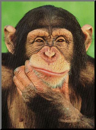 ED0281_p~Chimpanzee (313x425, 40Kb)