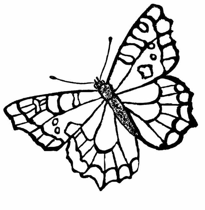 butterfly6 (681x700, 147Kb)