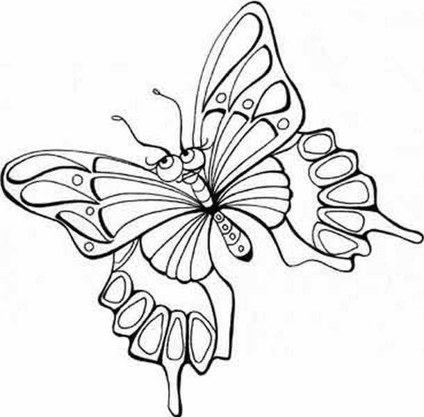 butterfly7 (610x600, 100Kb)