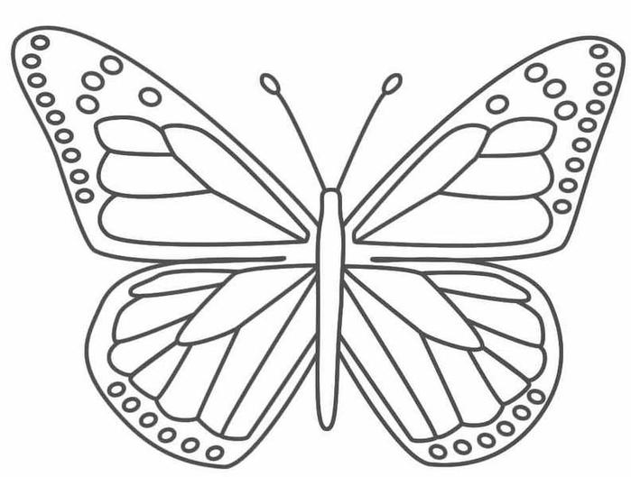 butterfly9 (700x529, 139Kb)