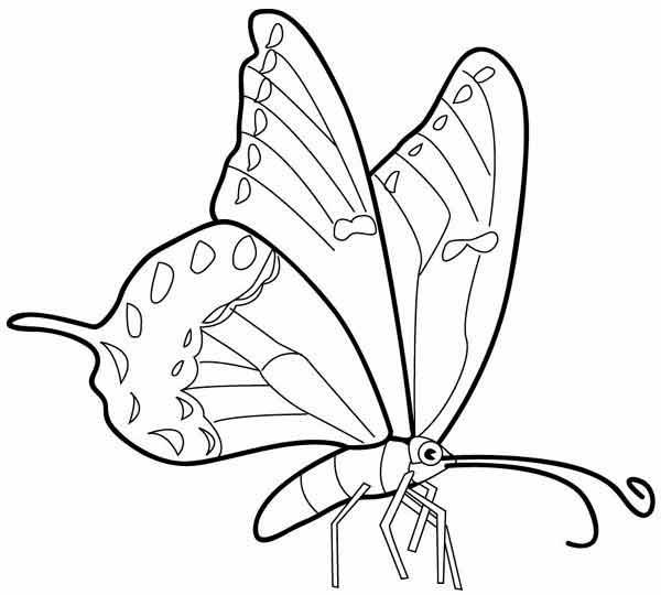 butterfly16 (600x540, 85Kb)